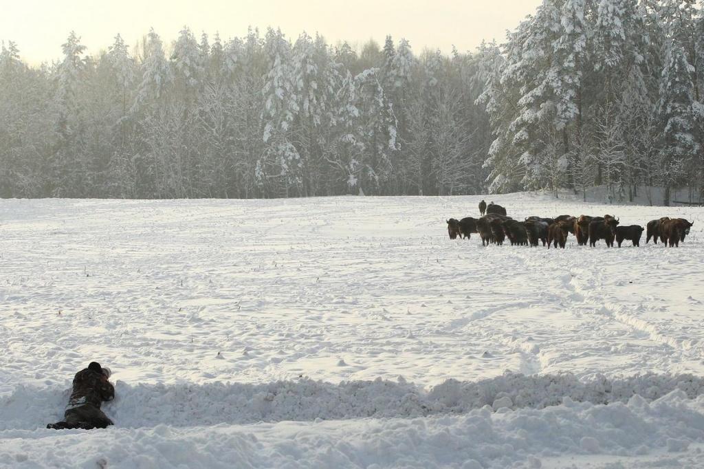 ekologicheskij-turizm-dopolnenie-ohotnichem-hozyajstve_07.jpg